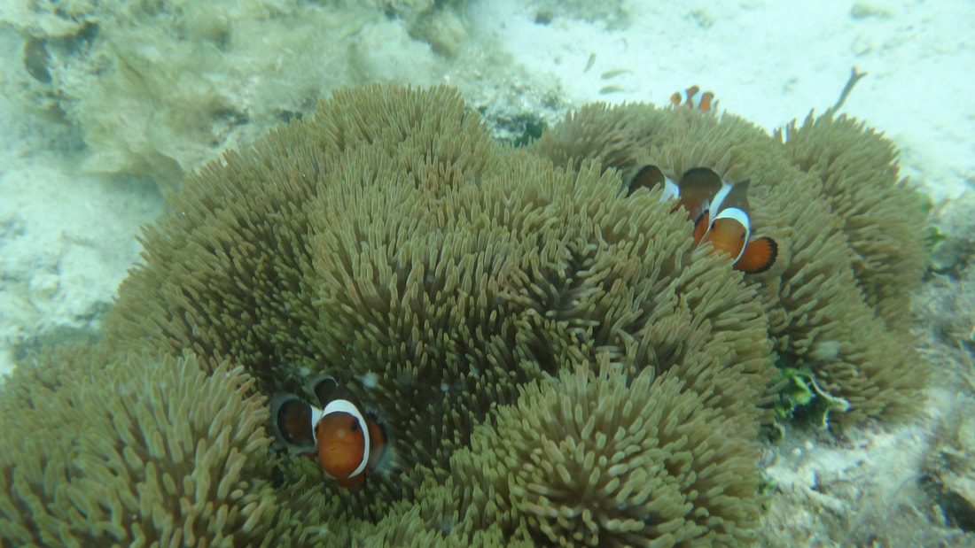 El Nido Tour Packages Aurora Travel And Tours Philippines