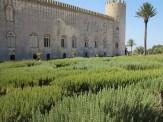Gewaltige Rosmarinhecke am Castel Donnafugata