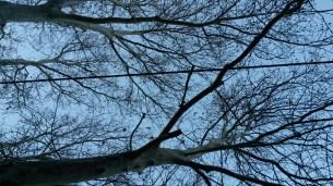 Trees - no zoom