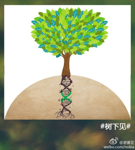 Nokia Weibo - Roots-DNA