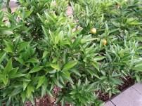 Oppo-N1-Plants