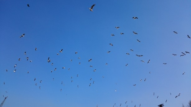 Sony-Xperia-Z3-Compact-Harbour-Birds