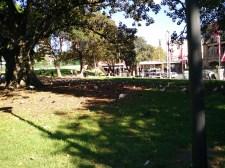 Oppo-R5-Park