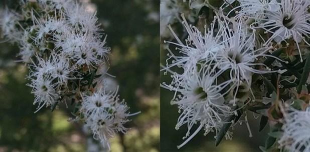 blossom-fullcrop