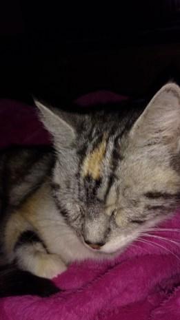 Edie sleeping