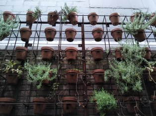 r9s-potplants