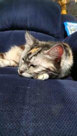 Edie resting