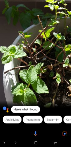 Google-Lens-Plant-Identification-Test (2)