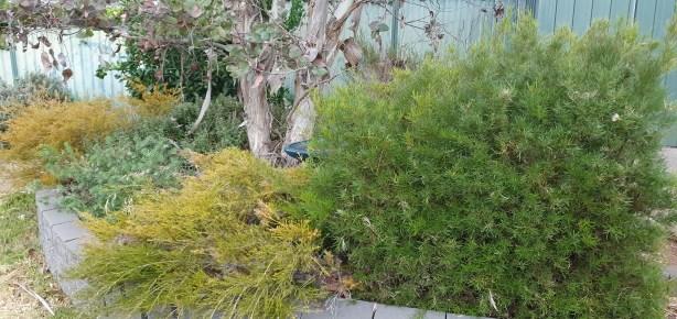 S10e garden