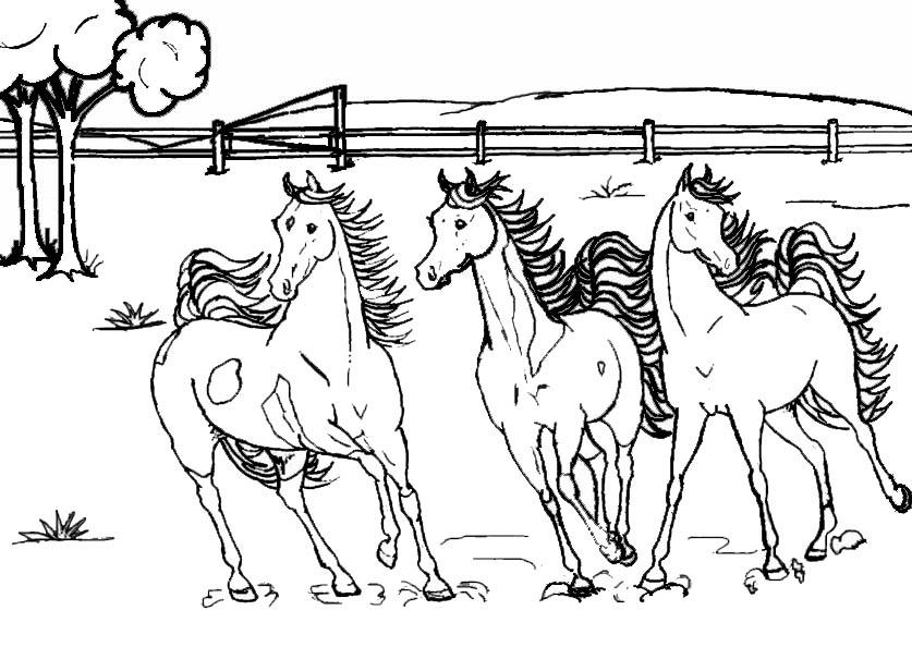 Bilder Zum Ausmalen Pferde 16 Bilder Zum Ausmalen