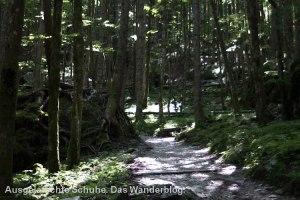 Mannshohe Findlinge beherbergen riesige Bäume