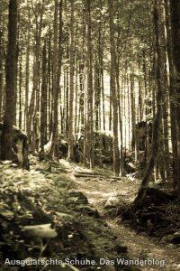 Wald auf St. Bartholomä