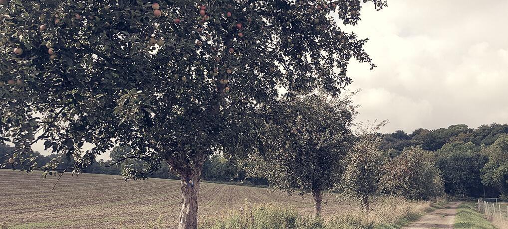 Der Obstweg in Leichlingen