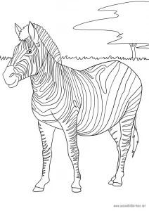 Zebra als Malvorlage Ausmalbilder Pferde - viele