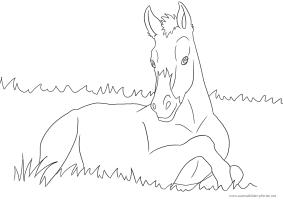 Ausmalbild mit Pferd   Fohlen   Ausmalbilder Pferde ...