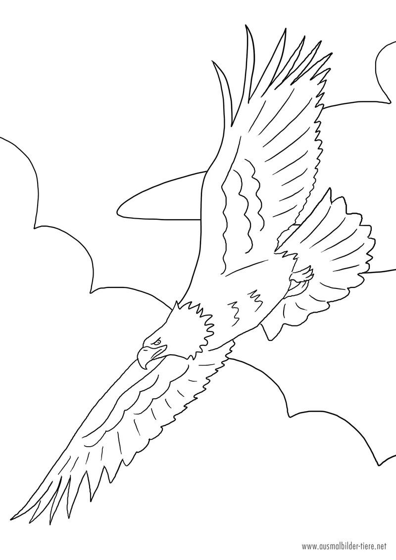 Adler zum Ausmalen Ausmalbilder Pferde - viele