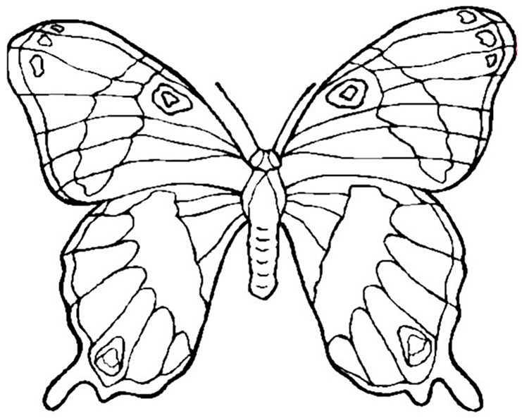 Schmetterling 3 Ausmalbilder Kostenlos