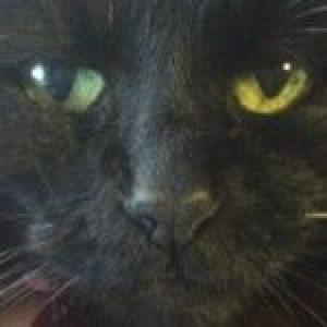 Profile photo of Masaki