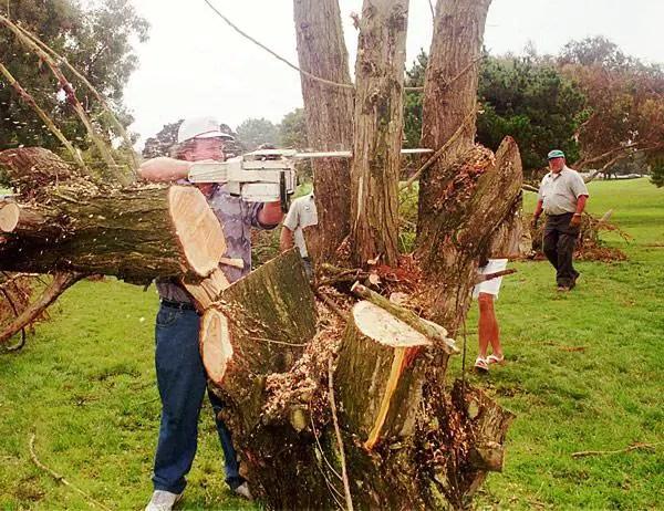 Craig Stadler tree