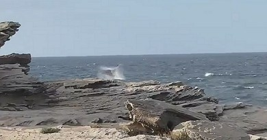 Whale captured breaching off the coast of New South Wales Golf Club
