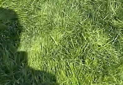 US OPEN: Golfers share annual, crazy-long rough videos