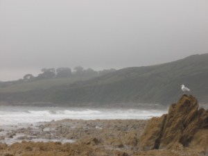 Overcast_coast_with_seagull