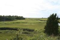 cassie's salt marsh