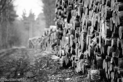 Holzeinschlag die Erste