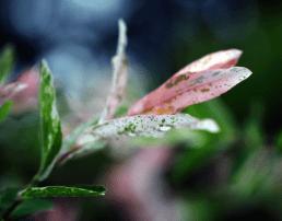 2015-06-23_03_nach_dem_grossen_Regen