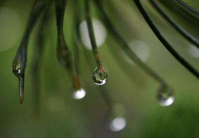 2015-06-23_07_nach_dem_grossen_Regen