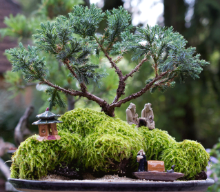 Felsbepflanzung