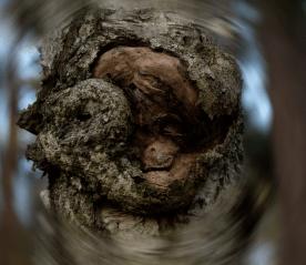 Der_Baum