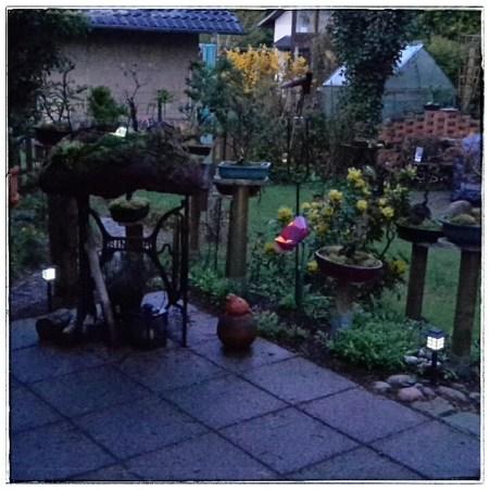 Bonsaigarten auf Lavastein (Dämmerung)