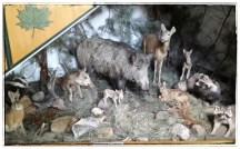 Tiere des Müggelwaldes (Lehrkabinett)