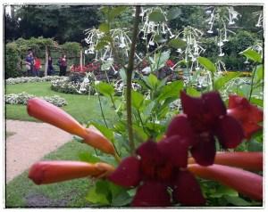Pfaueninsel - Rosengarten