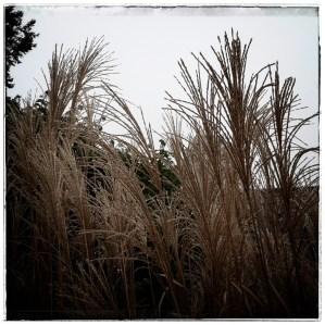 """Immer wieder ein Erlebnis, wie sich Gras über das Jahr hin """"verwandelt"""""""