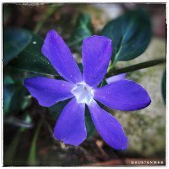 Blaue Blüte ;-)