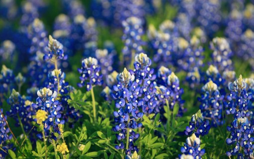 These 10 Things Are Sure Signs That It Is Spring In Austin