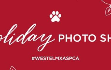 Furry Friends Holiday Photo Shoot for the ASPCA!