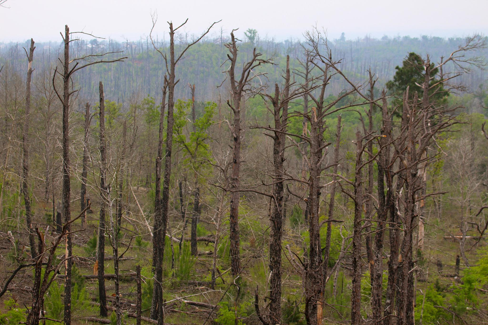 bastrop state park wildfire flood 2011 2015