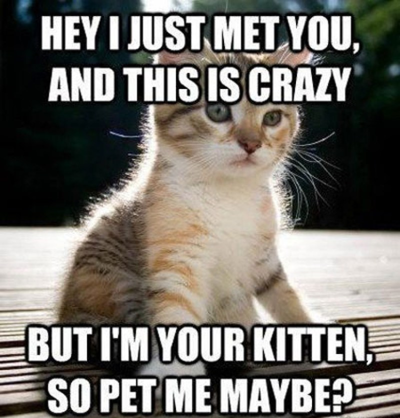 funny-cat-memes-that-will-make-you-lol-1457004416l4c8p