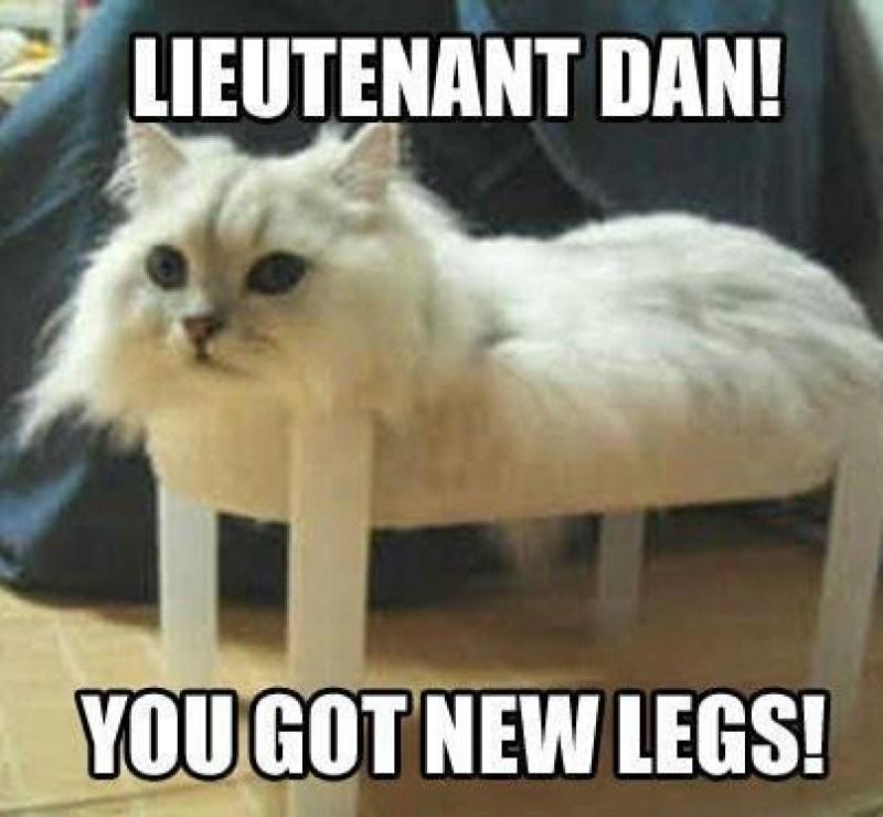 funny-forrest-gump-parody-cat-memes