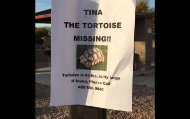 Runaway 60lb. Tortoise Mascot Safely Returned To Gullett Elementary
