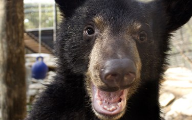 OMG You Can Party With Bears This Weekend At Austin Zoo!