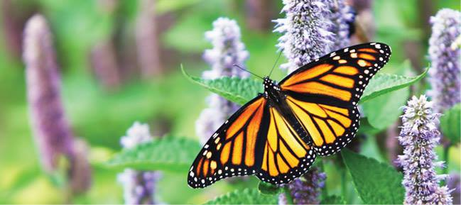 Austin Butterfly Forum Monthly Meeting