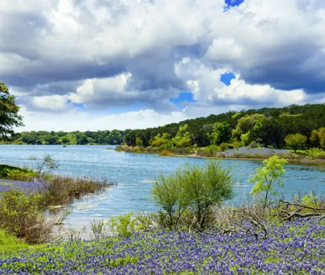 Allergies In Austin Texas