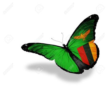 Zambia-flag-butterfly-flying-isolated-on-white-background-Stock-Photo