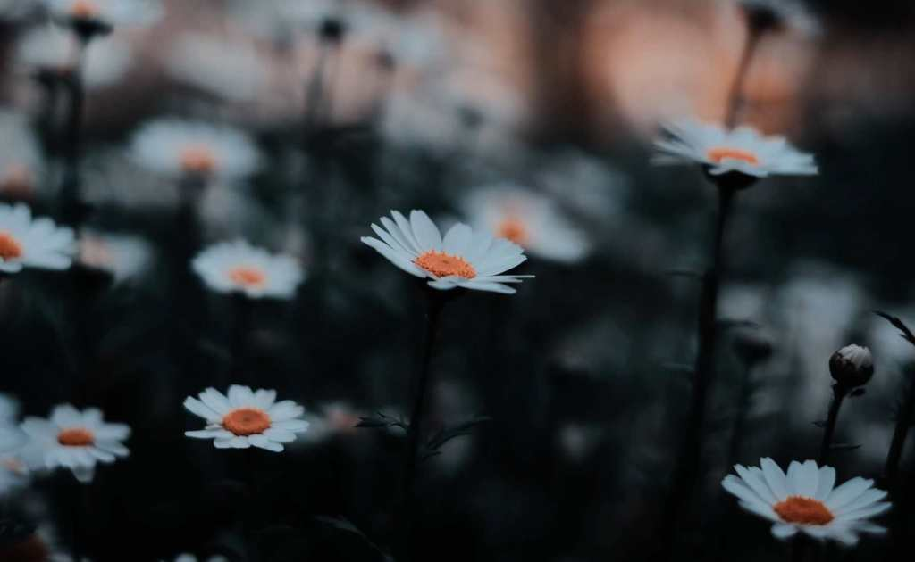 If I Had My Life To Live Over Again, I'd Pick More Daisies. A poem by Nadine Stair