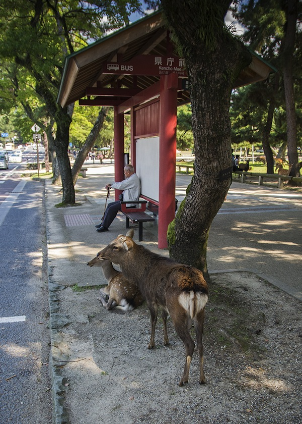 Deer at Bus stop