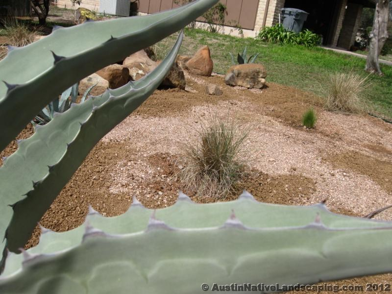 Agaves-Look-Good-In-Xeriscape-Designs